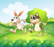 A bunny and a cat running Royalty Free Stock Image