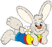 Bunny with a chamomile Stock Photos