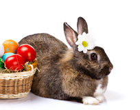 Bunny with chamomile and easter eggs Royalty Free Stock Photos