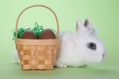 Bunny with chocolate eggs Royalty Free Stock Images