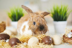Bunny and chocolate eggs Stock Photography