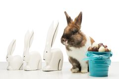 Bunny with chocolate eggs and rabbit figurines Royalty Free Stock Photo