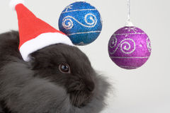 Bunny and christmas decorations stock image