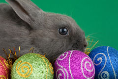 Bunny and christmas decorations royalty free stock photography