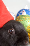 Bunny and christmas decorations. Black and white bunny and christmas decorations Royalty Free Stock Images
