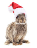 Bunny in Christmas hat. Bunny in Christmas hat on a white background Stock Photography