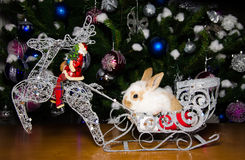 Bunny on christmas sled Royalty Free Stock Image