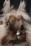 Bunny close up. Rabbit close up. Black background Stock Photo