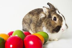 Bunny with colored eggs Royalty Free Stock Images