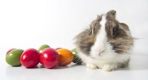 Bunny with colored eggs Stock Images