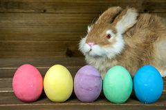Bunny with colorful Easter eggs Stock Photos