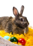 Bunny and colorful eggs Royalty Free Stock Image