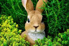 Bunny, Cute, Ears Royalty Free Stock Photography
