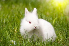 Bunny with daisies Stock Image