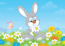 Bunny with a daisy stock illustration