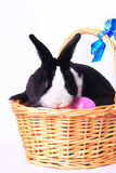 Bunny in Easter basket. With eggs and white background stock photography