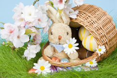 Bunny in easter basket royalty free stock images