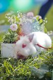 Bunny and easter colorful flowers on the grass at sunset. Easter holiday royalty free stock image