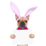 Bunny easter ears dog Stock Photos