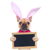 Bunny easter ears dog Stock Image