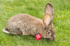 Bunny with Easter egg Stock Photos