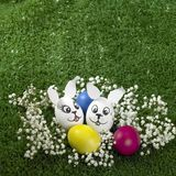 Bunny Easter eggs Stock Photos
