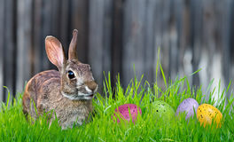 Bunny and Easter eggs stock image