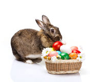Bunny and easter eggs Royalty Free Stock Photography