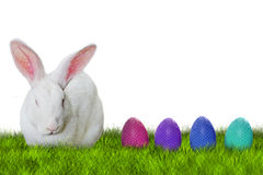 Bunny and Easter eggs on grass. On white background for Easter hunting Royalty Free Stock Photography