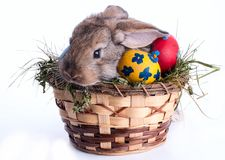 Bunny and Easter eggs on green grass royalty free stock photos