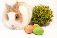 Bunny and easter eggs on white background. White and brown bunny and easter eggs on white background stock photo