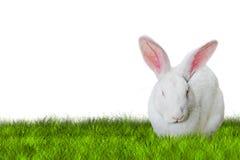 Bunny Easter en hierba en lado derecho Fotos de archivo libres de regalías
