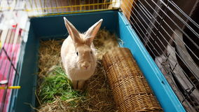 Bunny. Easter funny bunny Royalty Free Stock Photo