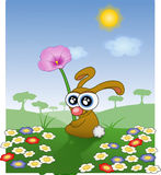 Bunny, Easter, Spring, Flowers Royalty Free Stock Photography