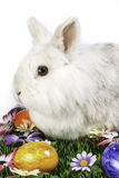 Bunny with eastern eggs. Flower meadow with Easter eggs in vertical format Royalty Free Stock Photography