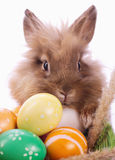 Bunny and eggs. Easter bunny with easter eggs Stock Photography