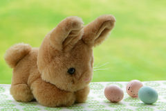 Bunny with eggs Stock Photos