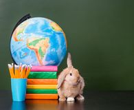 Bunny with eyeglasses sitting on the books near empty green chalkboard.  Stock Photography