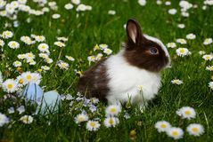 Bunny on field Stock Photos