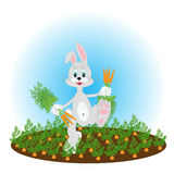 Bunny on the field with carrot Royalty Free Stock Photo