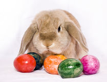 Bunny with five eggs Stock Photo