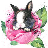 Bunny and flower rose T-shirt graphics. bunny fairy illustration with splash watercolor textured background. Stock Photography