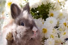 Bunny among the flowers. Can be used for easter greeting card royalty free stock images