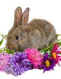 Bunny with flowers Royalty Free Stock Photography