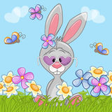 Bunny with flowers Royalty Free Stock Photos