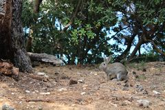 Bunny. At the forest of Lokrum island royalty free stock image