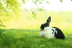 Rabbit on the grass. Bunny on the fresh grass Royalty Free Stock Image