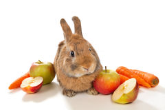 Bunny with fresh vegetables Stock Photos