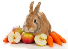 Bunny with fresh vegetables Stock Images