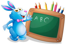 A bunny in front of a chalkboard with pencils at the back Royalty Free Stock Image